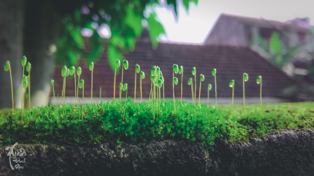 cỏ cây hoa lá